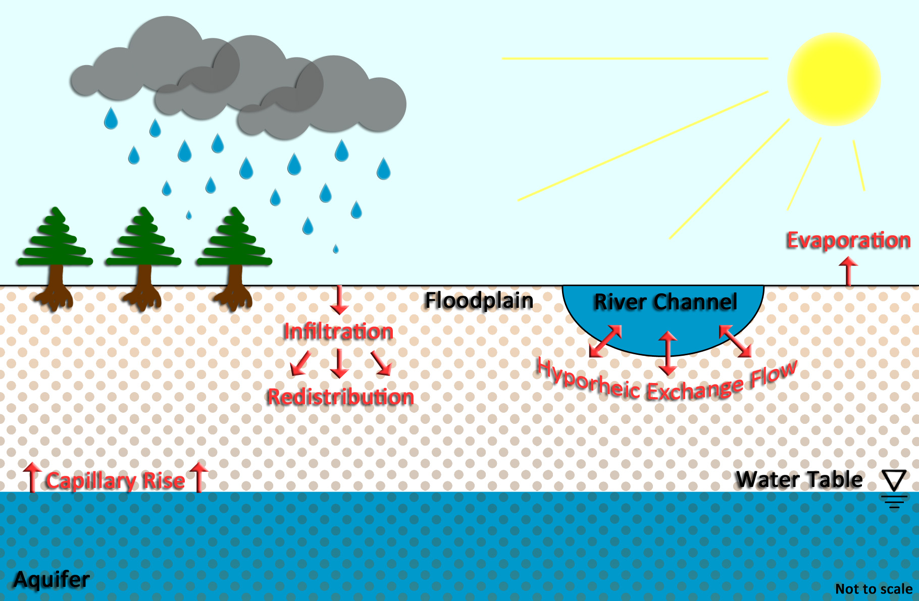 Diagram of hydrological   processes